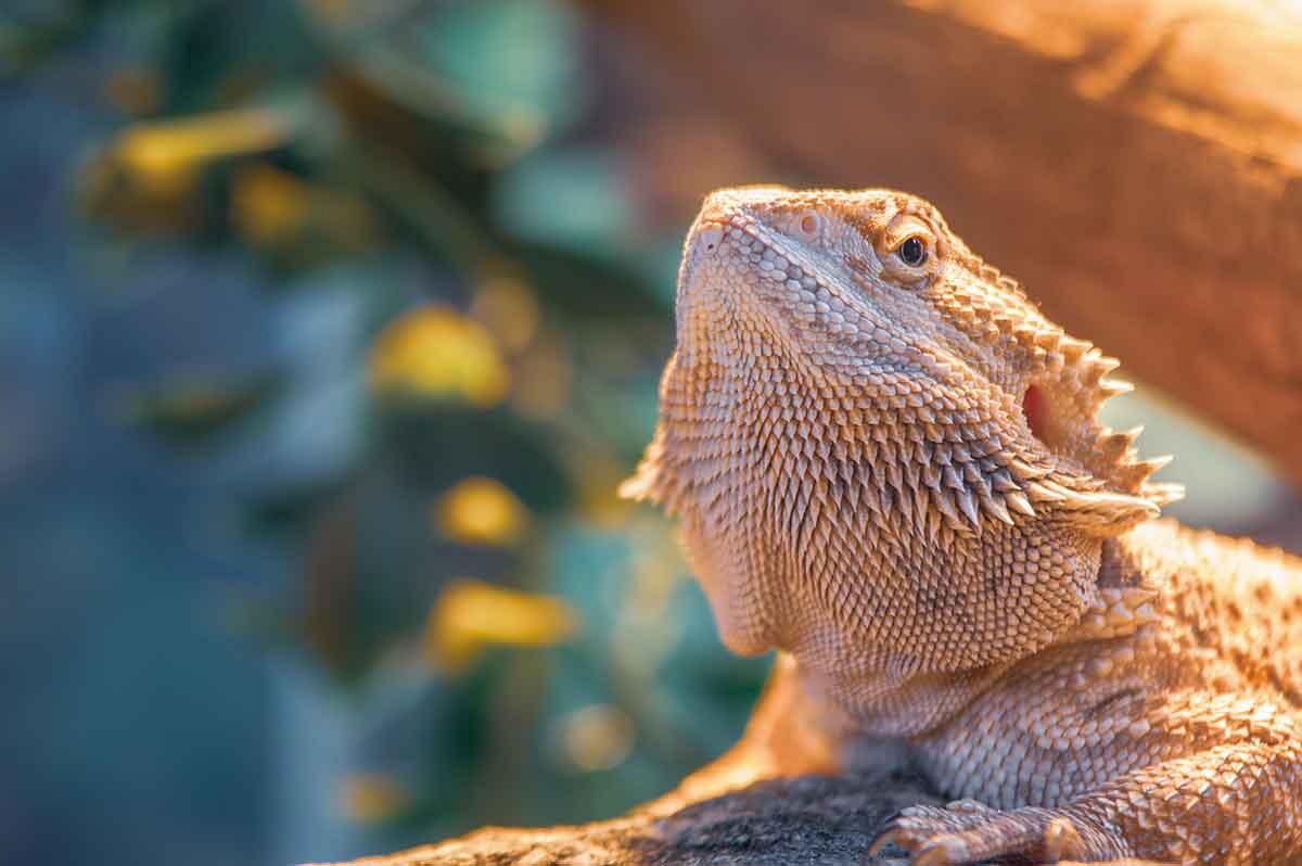 Futtertiere Tierfutter Reptilienfutter